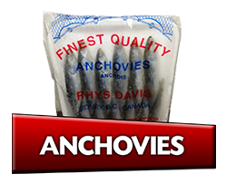 anchovies bait